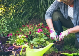 Gardening tips from Cheltenham Chiropractic Clinic