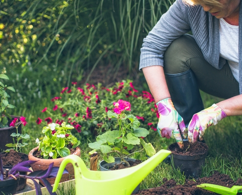 Gardening tips from Cheltenham Chiropractic Clinic